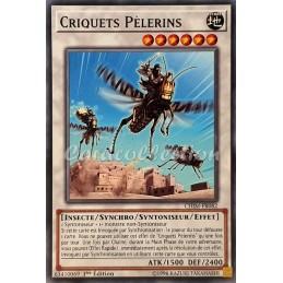 Criquets Pèlerins...